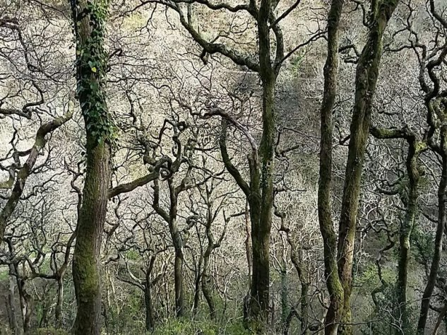 Winter woods at Watersmeet