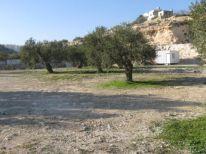 04. olive trees