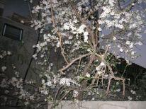 04. spring