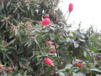 24. flowers