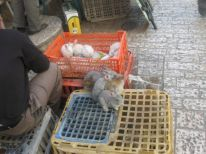 20. rabbits for sale