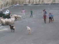 05. children and sheep