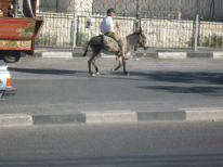 21. a donkey riding at the left side