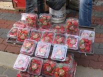 03. strawberries for the new season