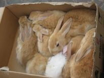 07. rabbits for sale