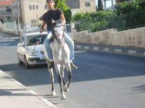 16. a horse