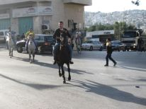 10. horses and young traffic regulator
