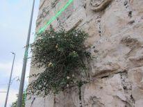 19. a wall is flourishing
