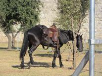 29. a police horse