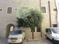 26. a tree in the courtyard