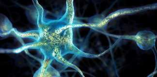 neurones soin