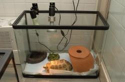 リクガメ飼育