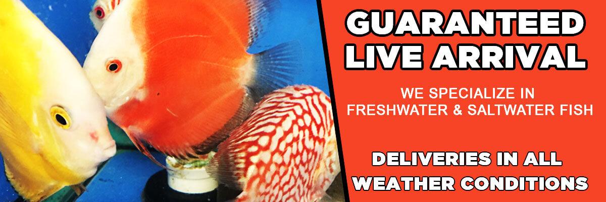 Freshwater fish banner 1