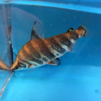 Exotic Fish Shop | We sell the highest quality freshwater