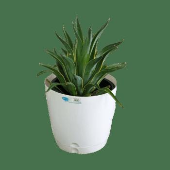 Plastic Pot white