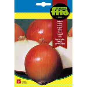 Fito Onion Valenciana Tardia De Exportaction Organic Seeds