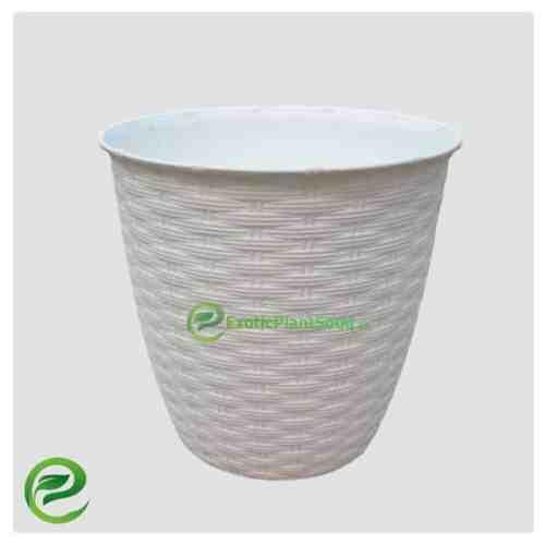 Plastic Pot White - exoticplantsouq.ae
