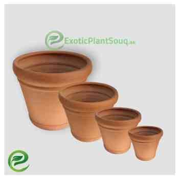 Terra Cotta Pots Clay Pots - Exoticplantsouq.ae