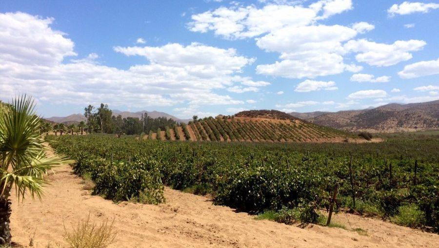 baja california mexico vineyard mexican wine