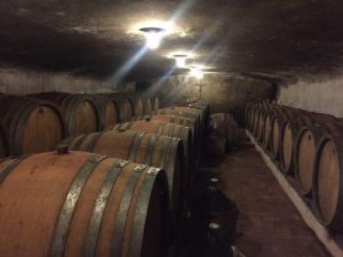 Klinec Cellar