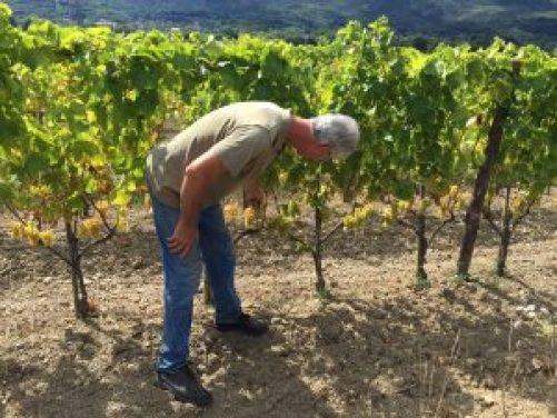 Mlecnik Vineyards