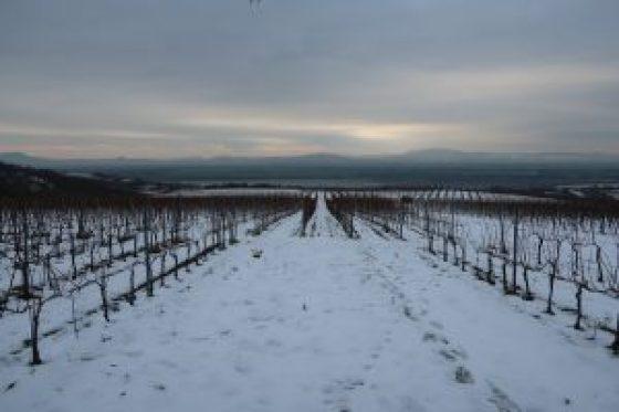 Bott Frigyes Vineyards