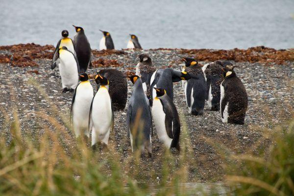 Torres del Paine, Tierra del Fuego y Parque Pingüino Rey