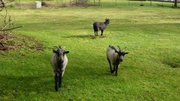Lawn mowing devices. Feed daily for best performance.