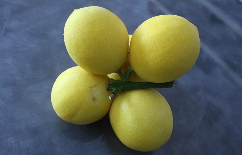 homegrown-lemons