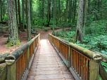 Forest bridge _ expatlingo.com