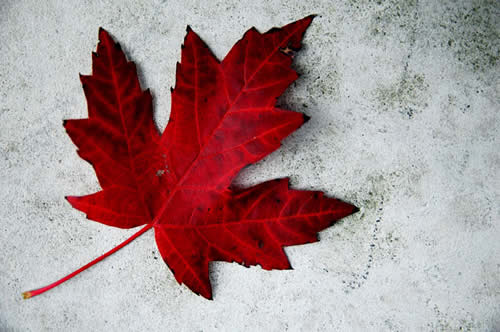Maple Leaf, Canada