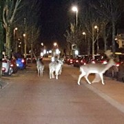 Deers (Photo: RTV Noord Holland)