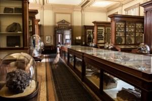 Teylers Museum Fossils
