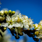 Blossom by Victor Droogh
