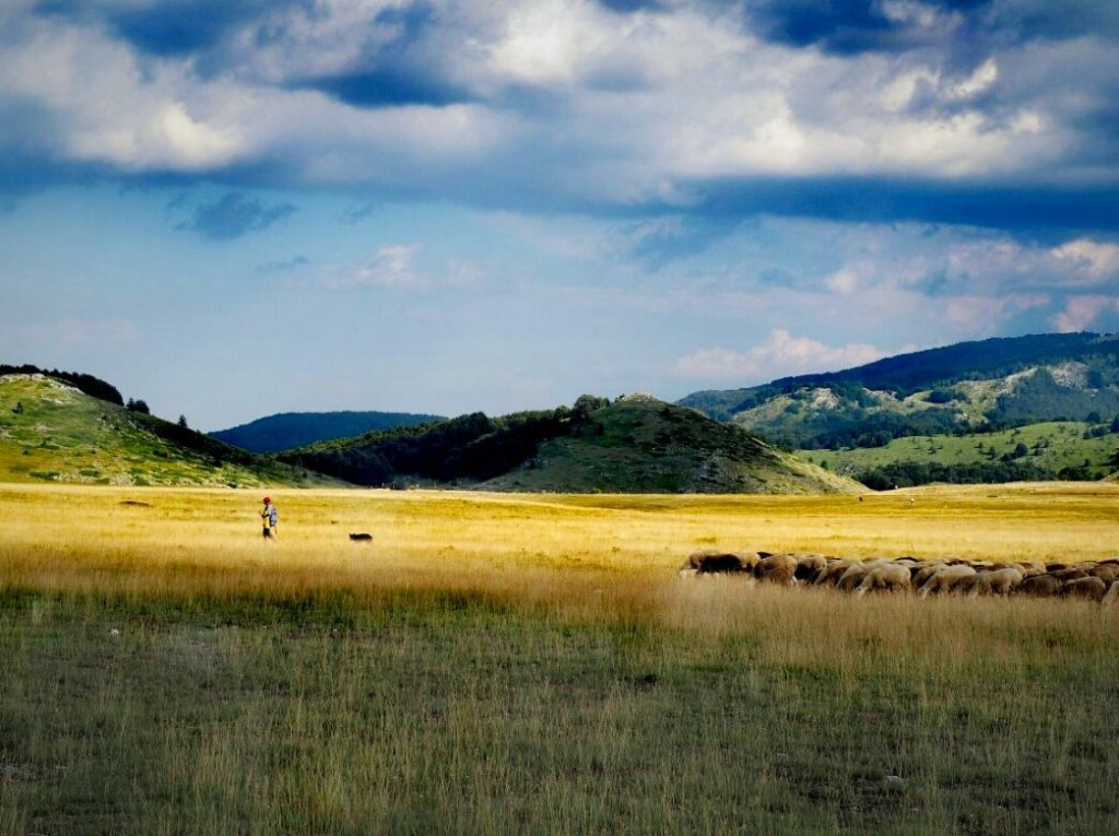 Typische Szenerie der Abruzzen: Schafe im Gran Sasso Nationalpark