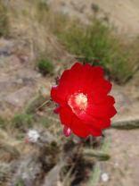 Blumen im Heiligen Tal