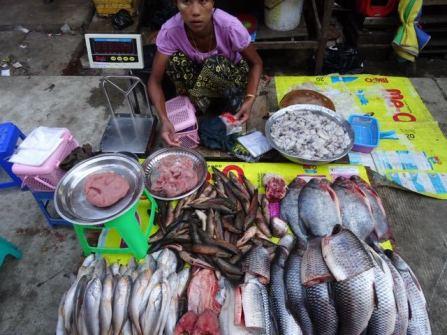 Fisch-Stand