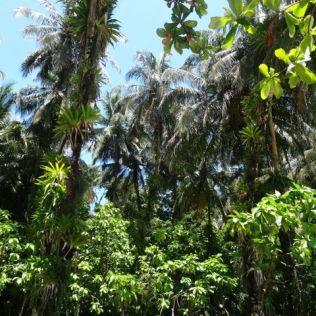 Palmen & mehr