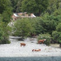 mit Blick auf Haus & Kühe