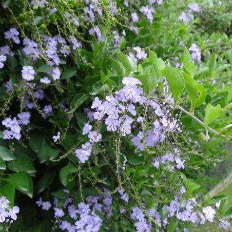 nie zugvorgesehene Blüten
