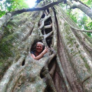 irgendwo im Baum