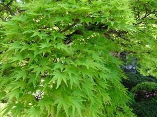 grün satt