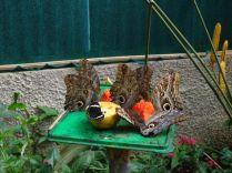 und Schmetterlinge beim Mahl