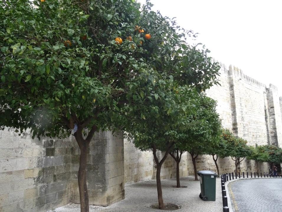 Olivenbäume in der City