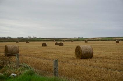 Heuballen in Cornwall