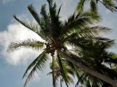 Palmen-Schatten