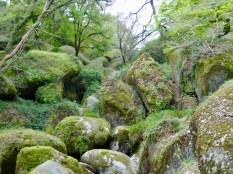 grüner Urwald