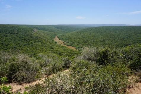 Südafrikas Wälder sind grün