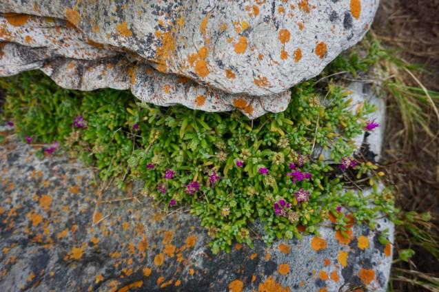 Steine und Blumen im Garden Route National Park