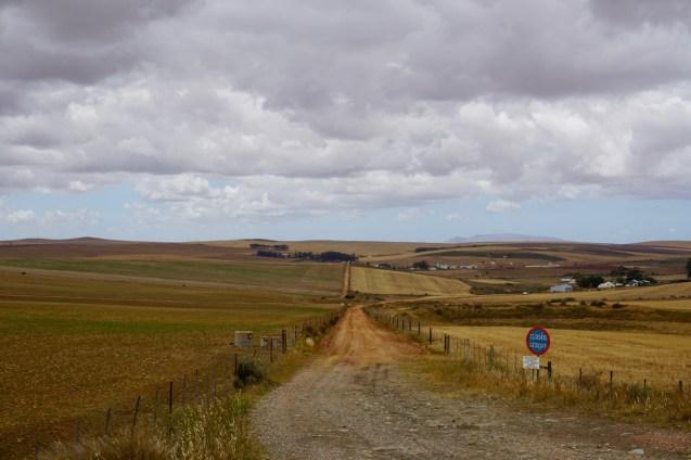 Getreidefelder im November